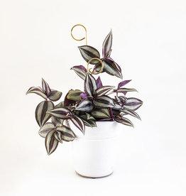 Botanopia Tuteur pour plantes or Mini - Perch