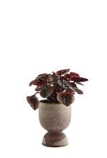 Madam Stoltz Stoneware flower pot Ø10 h14.5 cm - Brown