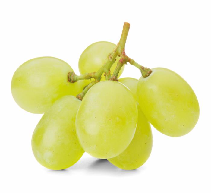 Druiven struik
