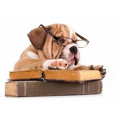 Ansichtkaart Engelse Bulldog