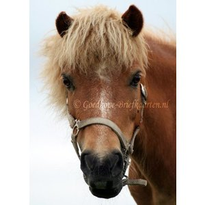 TSS-Nijkerk Ansichtkaart Paardenkop