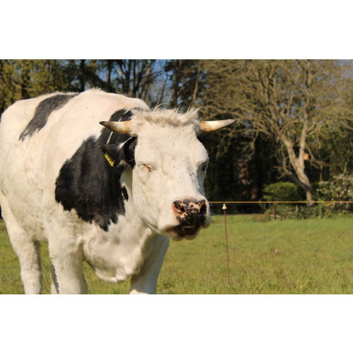 Rundvlees uit de regio Malse runder riblappen