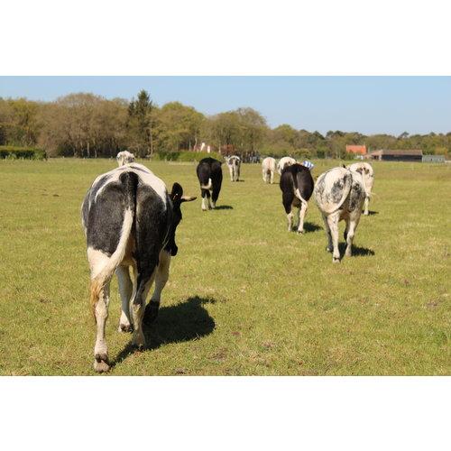 Rundvlees uit de regio Magere runderlappen