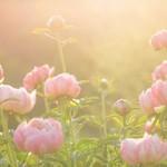 Miglot fragrance lab MIGLOT 50ml Eau de Parfum Formula #12 - floral natural
