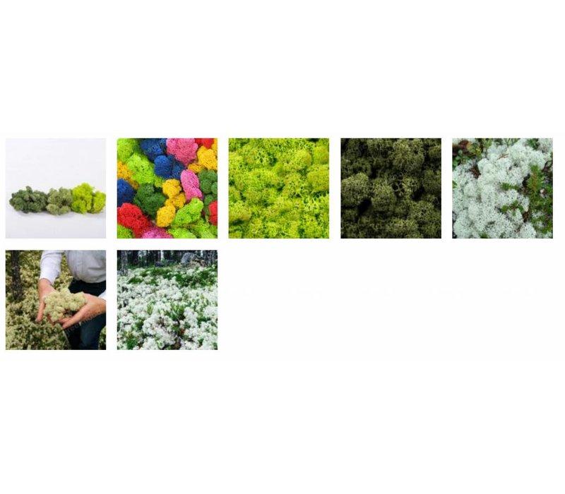 Pictogram uit mos - No Smoking