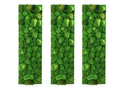 Green Mood Kokoon tableaux végétaux de mousse boule