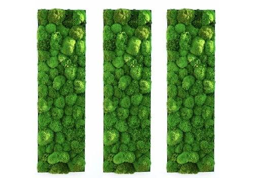 GreenOffice Kokoon tableaux végétaux de mousse boule