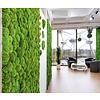 GreenOffice Plantenwand uit mosbol