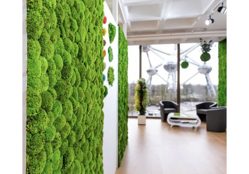 Green Mood Mur végétal de mousse boule