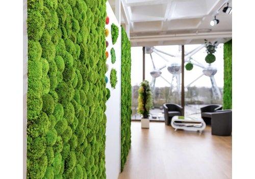 Mur végétal de mousse boule