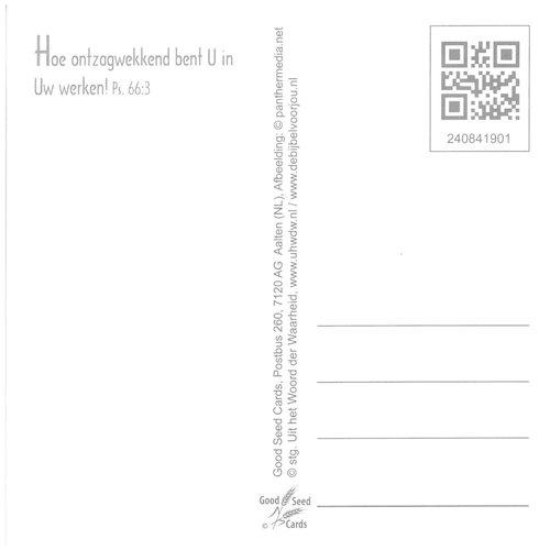 Vierkante luxe ansichtkaart 84-19