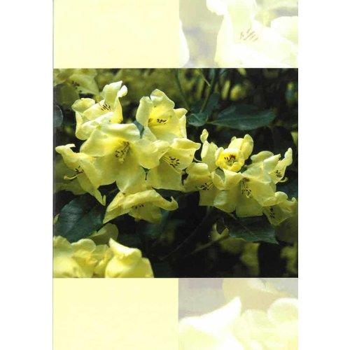 Luxe dubbelkaart met los inlegvel met tekst Neh. 8:11 dk0420bvLuxe dubbelkaart met los inlegvel met tekst Neh. 8:11 dk0420bvLuxe dubbelkaart met los inlegvel met tekst Neh. 8:11 dk0424bv