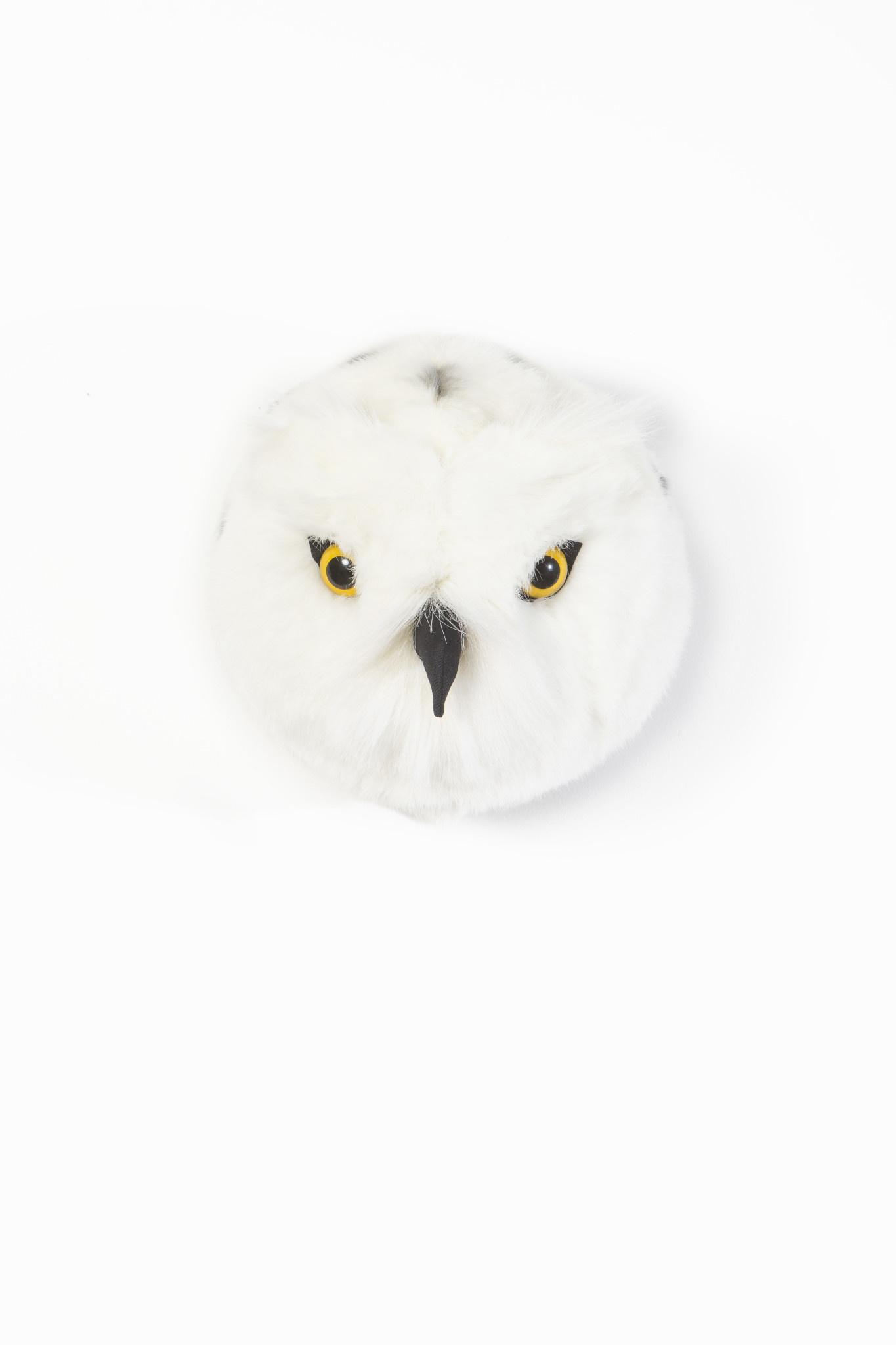 Dierenkop sneeuwuil chloe-1