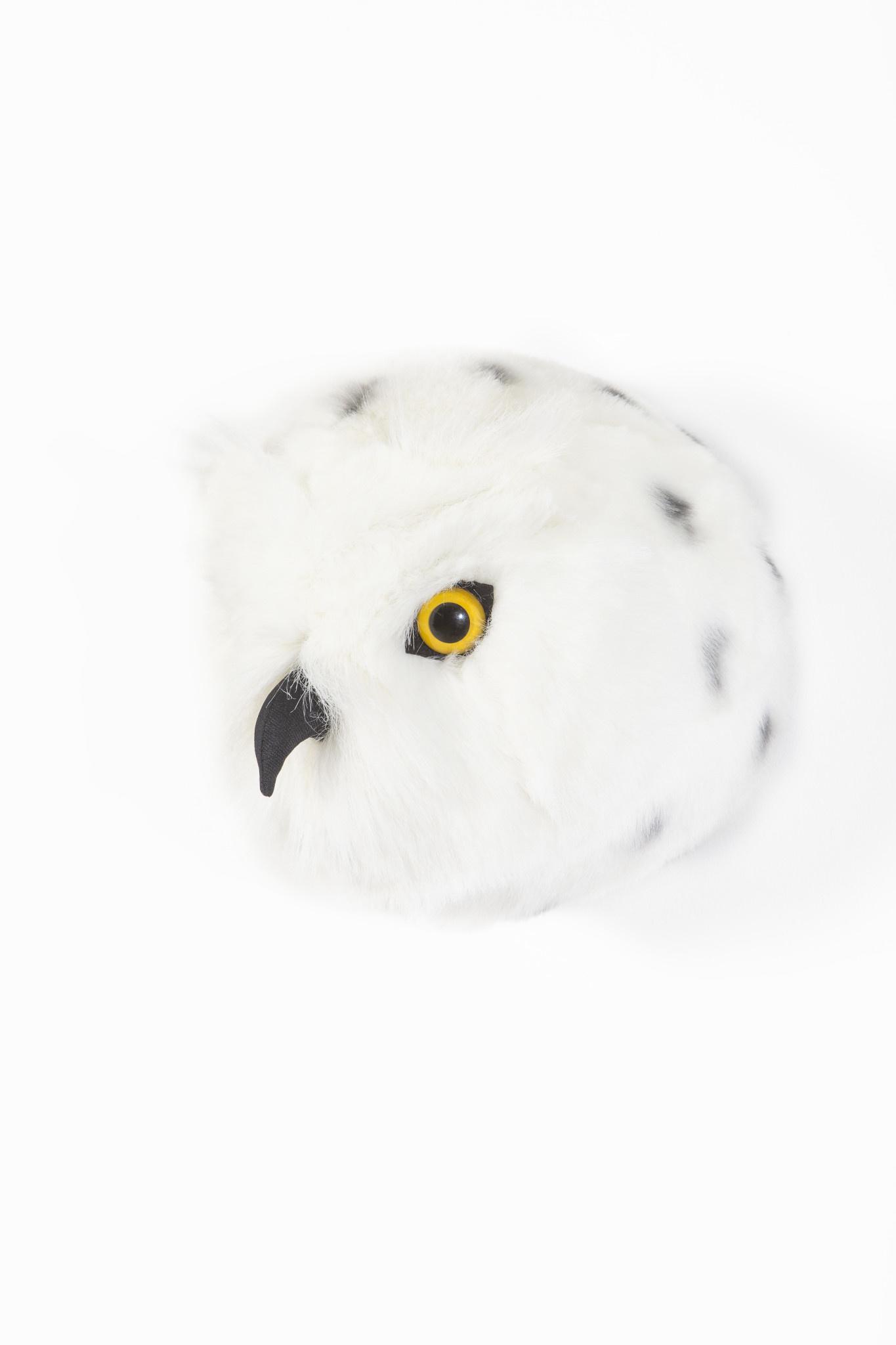 Dierenkop sneeuwuil chloe-2
