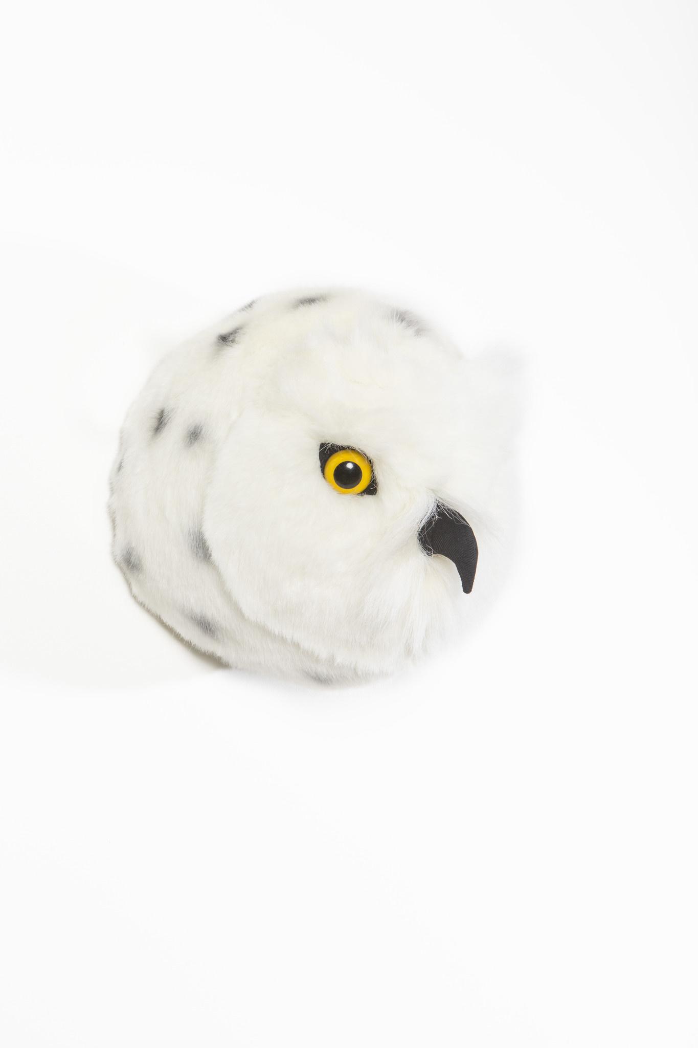 Dierenkop sneeuwuil chloe-3