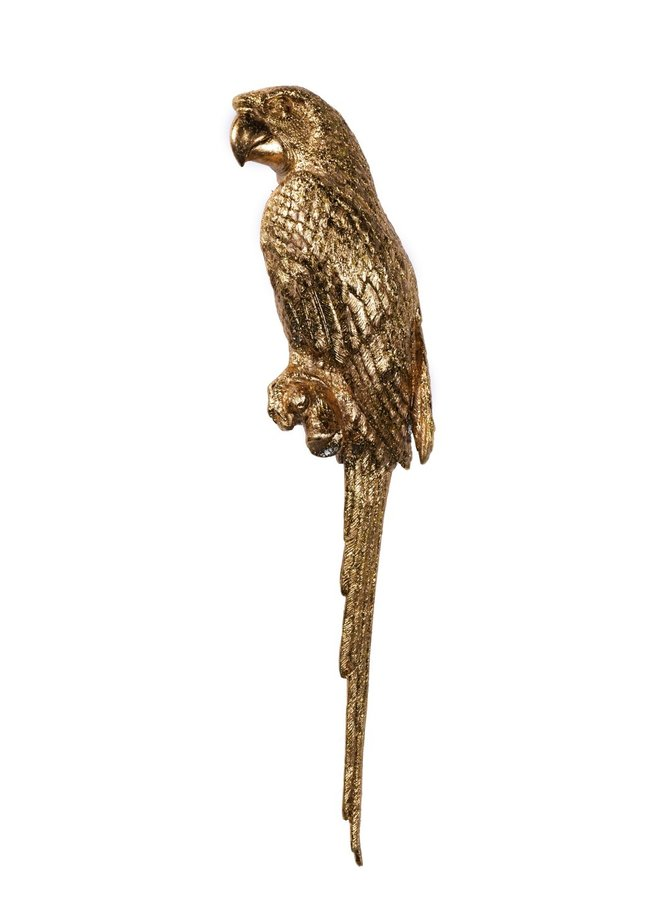 Perroquet têtu - right