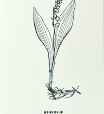 Blommm Luxury postcard Lily-of-the-valley - Blommm