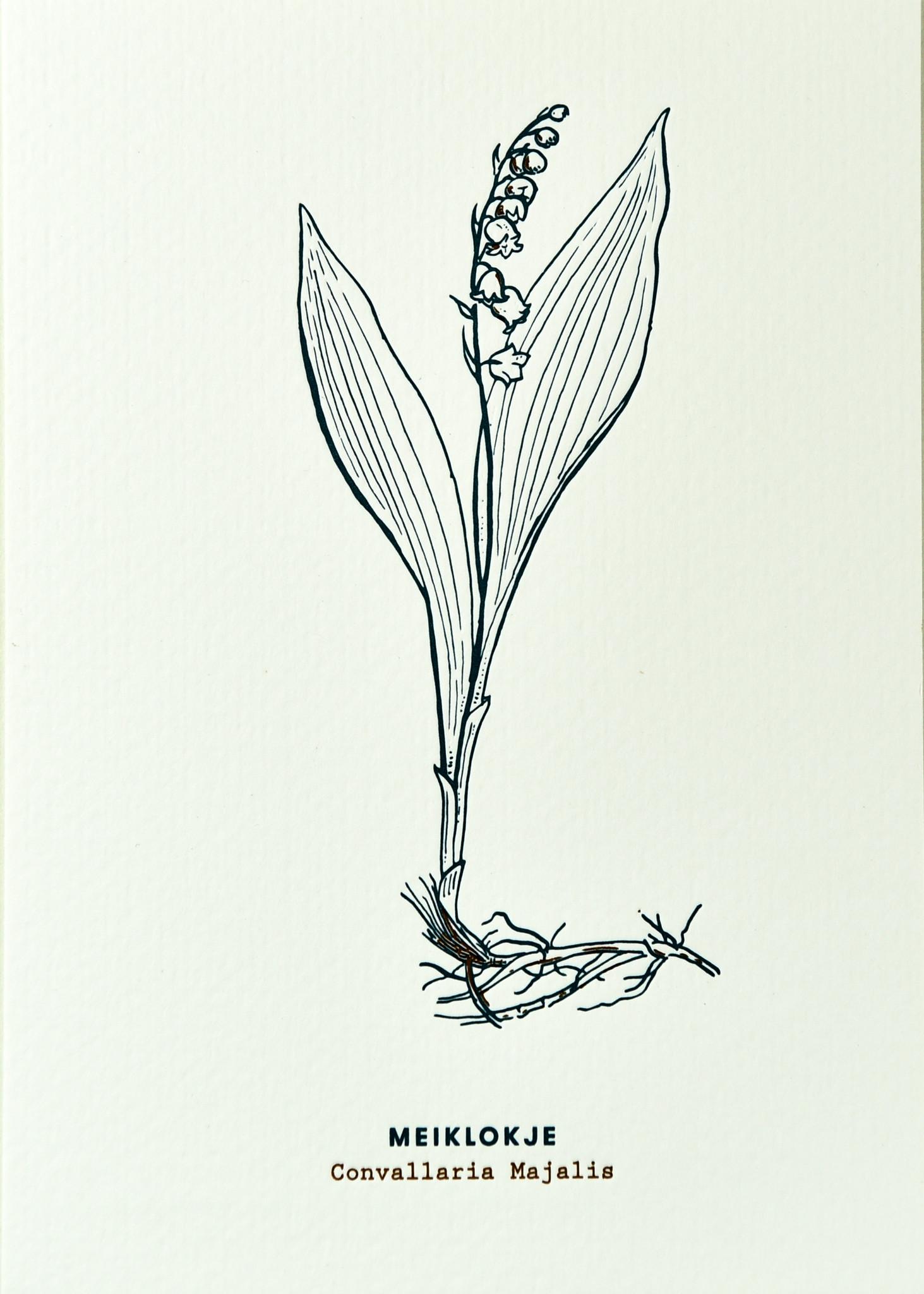Blommm Luxe postkaart Meiklokje - Blommm