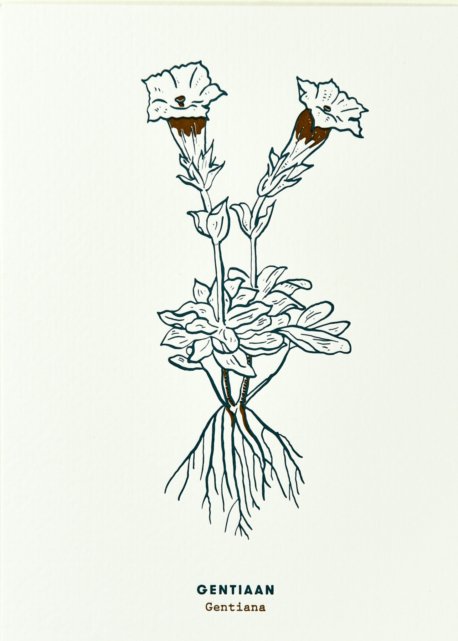 Blommm Luxe postkaart Gentiaan - Blommm