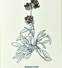 Blommm Luxe postkaart Wondklaver - Blommm