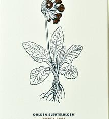 Blommm Luxe postkaart Gulden Sleutelbloem - Blommm
