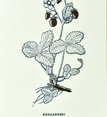 Blommm Luxury postcard Wild strawberry  - Blommm