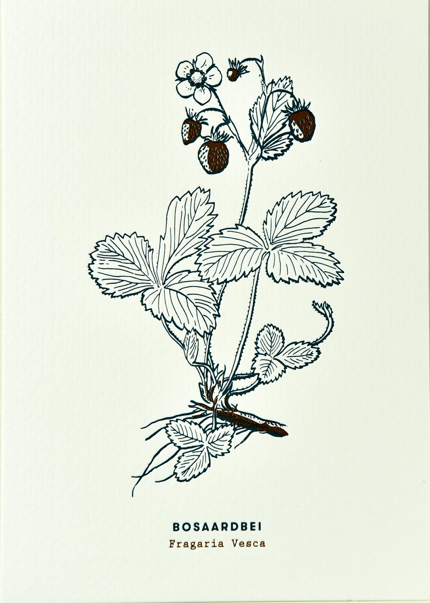 Blommm Luxe postkaart Bosaardbei - Blommm