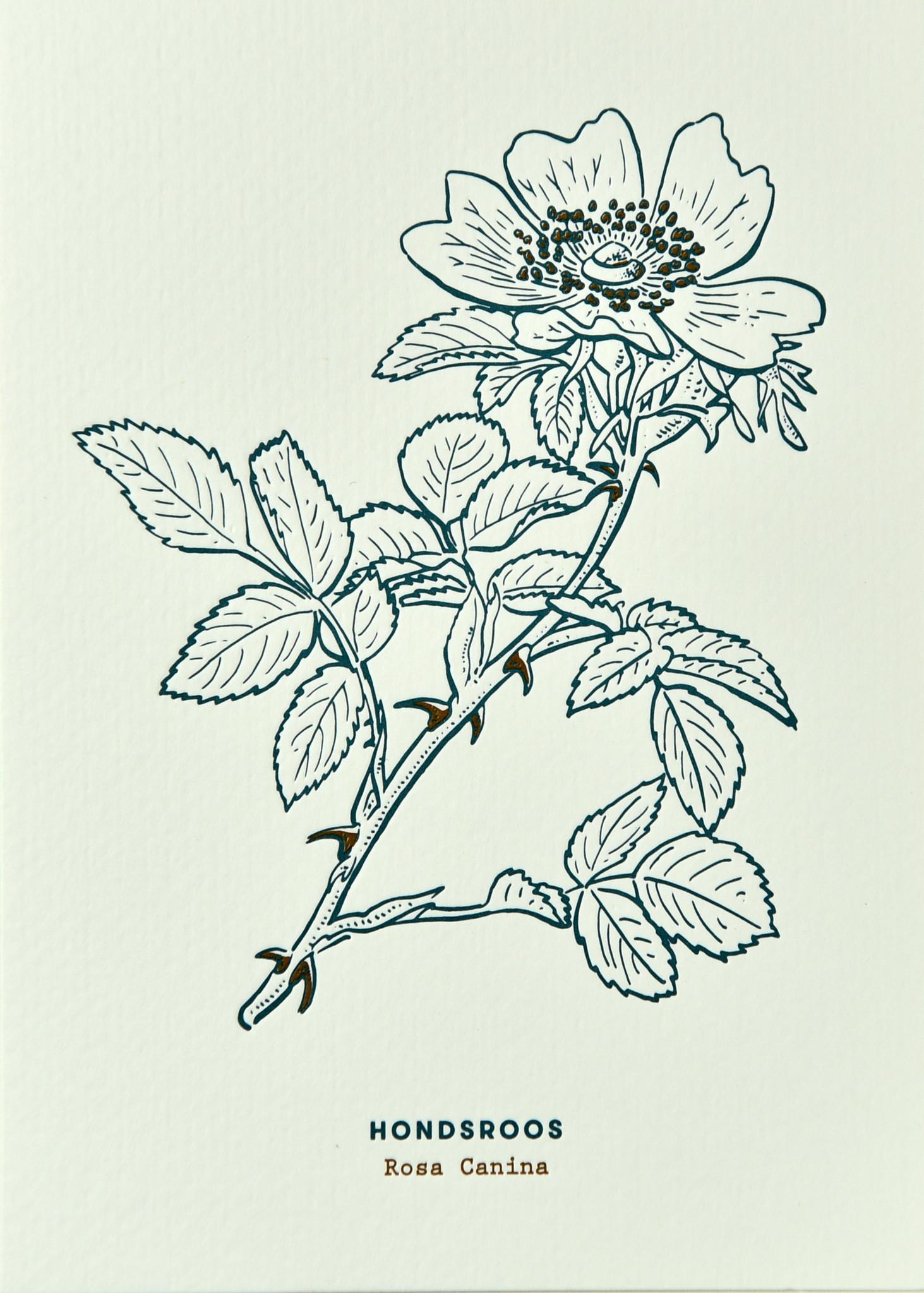 Blommm Luxe postkaart Hondsroos - Blommm