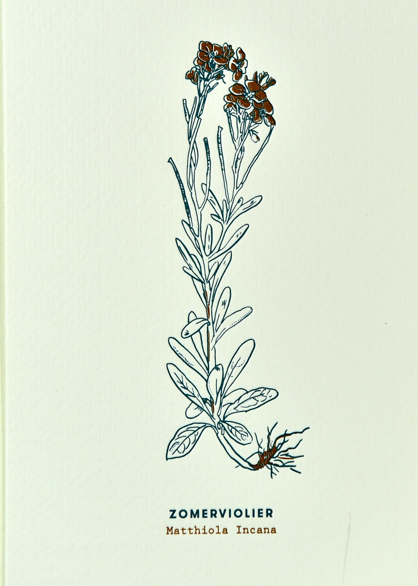 Blommm Luxe postkaart Zomerviolier - Blommm