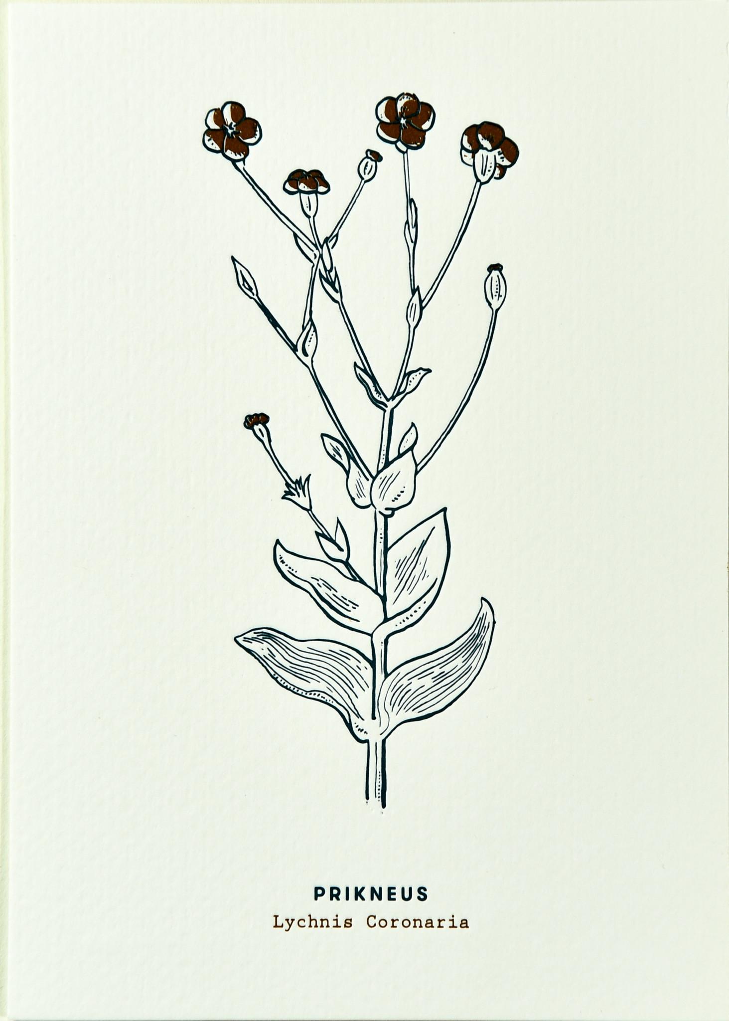 Blommm Luxe postkaart Prikneus - Blommm