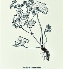 Blommm Luxe postkaart  Vrouwenmantel - Blommm
