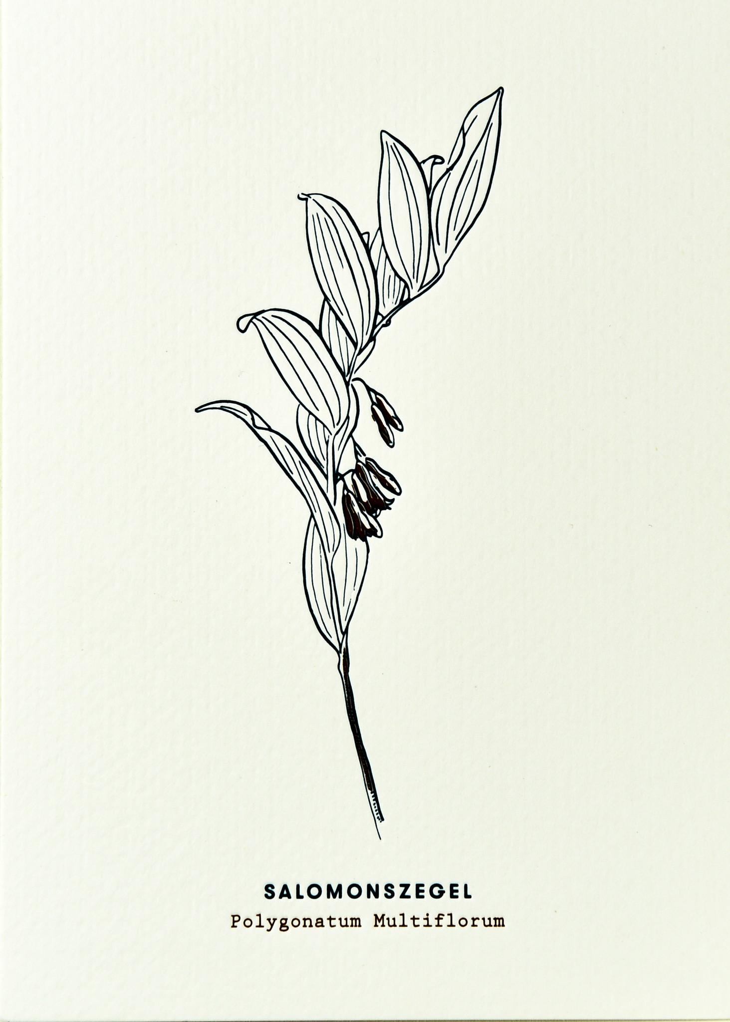 Blommm Luxe postkaart Salomonszegel - Blommm