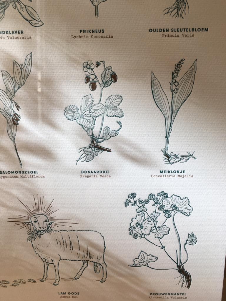 Blommm Poster - Blommm