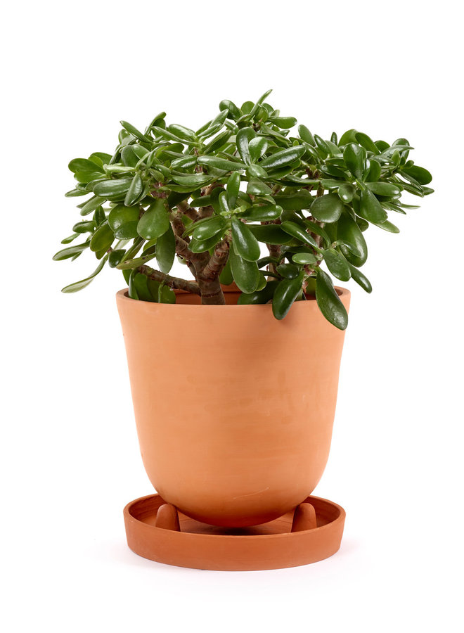 PLANT POT CONICAL WITH SAUCER