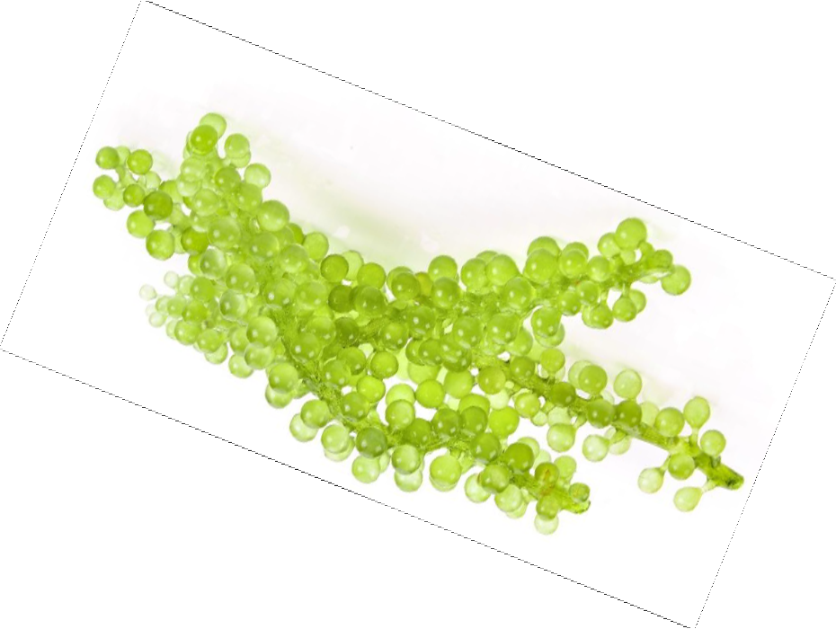 Mila d'Opiz Vegan Green Cavair Seagrapes