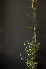 Botanopia BOTANOPIA plant support