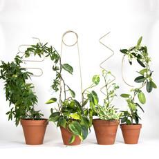 BOTANOPIA BOTANOPIA golden plant stake