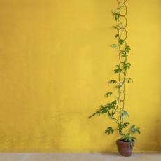 BOTANOPIA BOTANOPIA plant support zwart