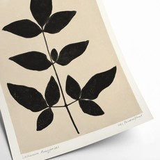 PSTR studio Laburnum Anagyroides - PrintedPlant