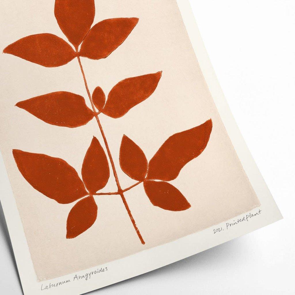 PSTR studio Laburnum Anagyroides II - PrintedPlant