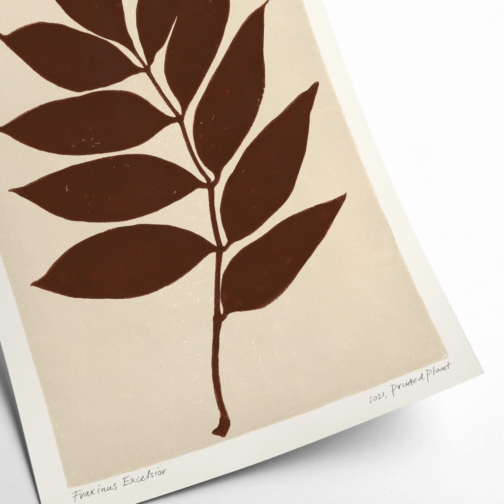 PSTR Studio Fraxinus Excelsior - PrintedPlant
