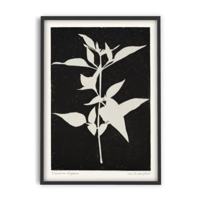 PSTR studio Eupatorium Rugosum II - PrintedPlant