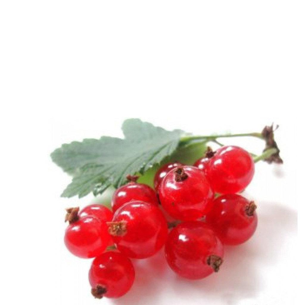 Lippenbalsem 15g Red Berry