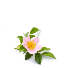 Hand Soap 100g Wild Rose