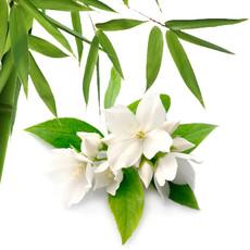 Hand Lotion Bamboo Jasmine 50ml