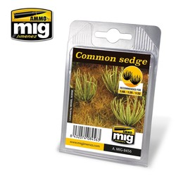 Common Sedge - A.MIG-8456