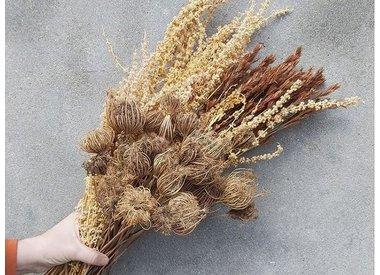 Grains & Grasses
