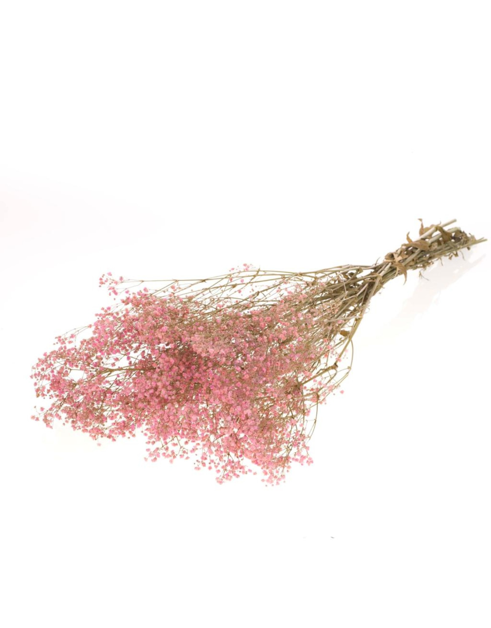 Gypsophila preserved bleached pink x 30