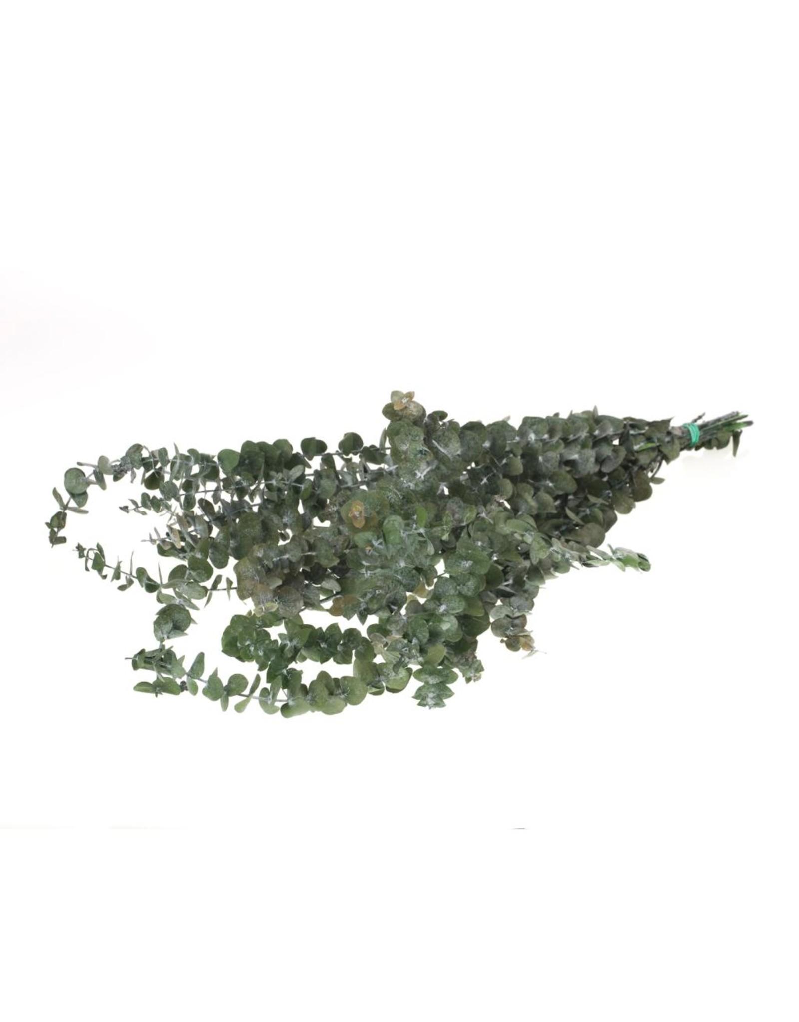 Eucalyptus baby preserved moss green x 20