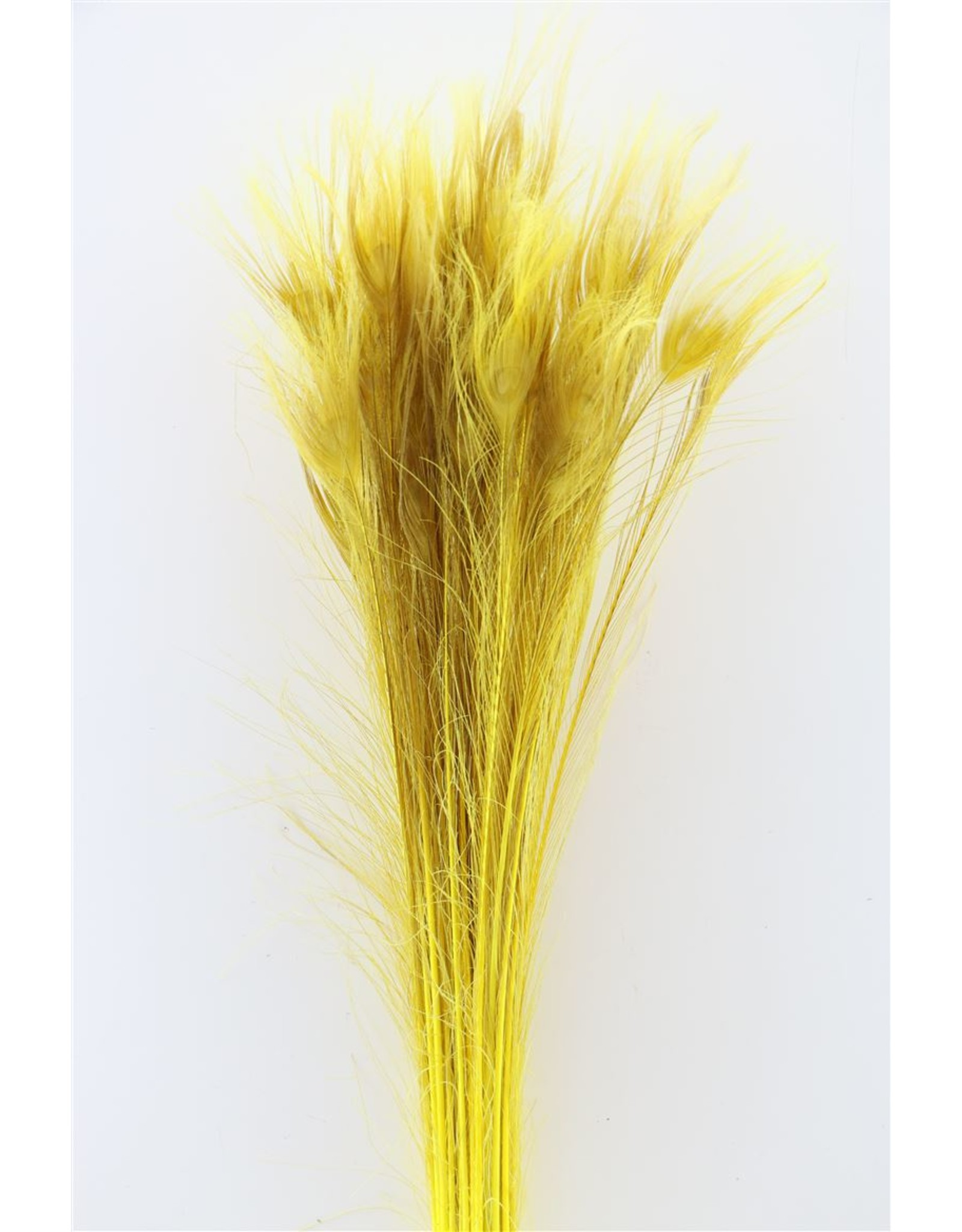Dried Feather Peacock L90-100 Yellow x 50
